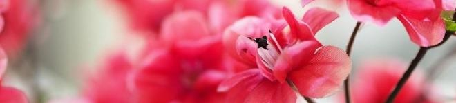 Venta flores y plantas